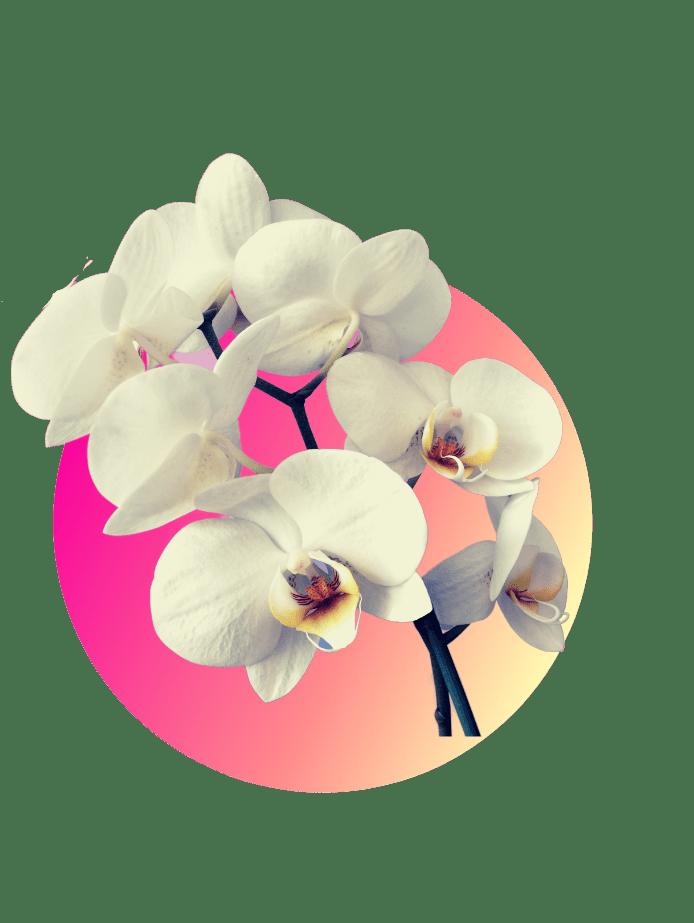 Muttertagsgeschenk Orchideen