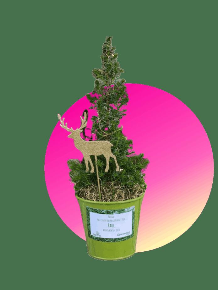 Weihnachtsgeschenke für Schwiegereltern